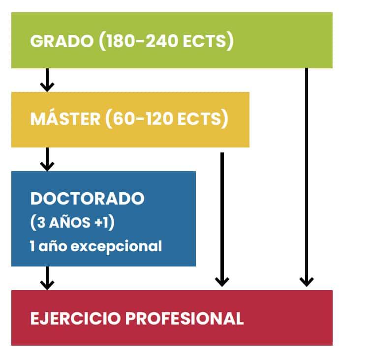estructura del sistema universitario español